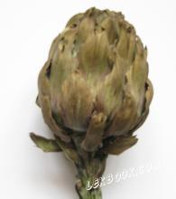 Артишок - Cynara scolymus L.